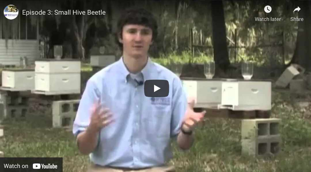 Small Hive Beetle (YouTube Video)
